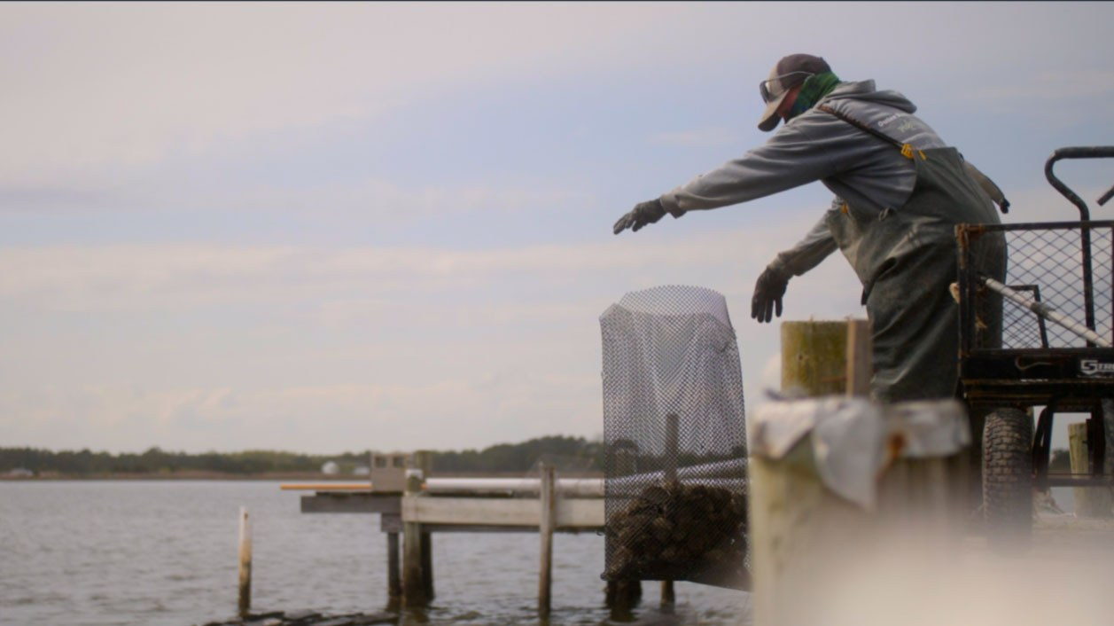 Oysters Sustainable Fishing