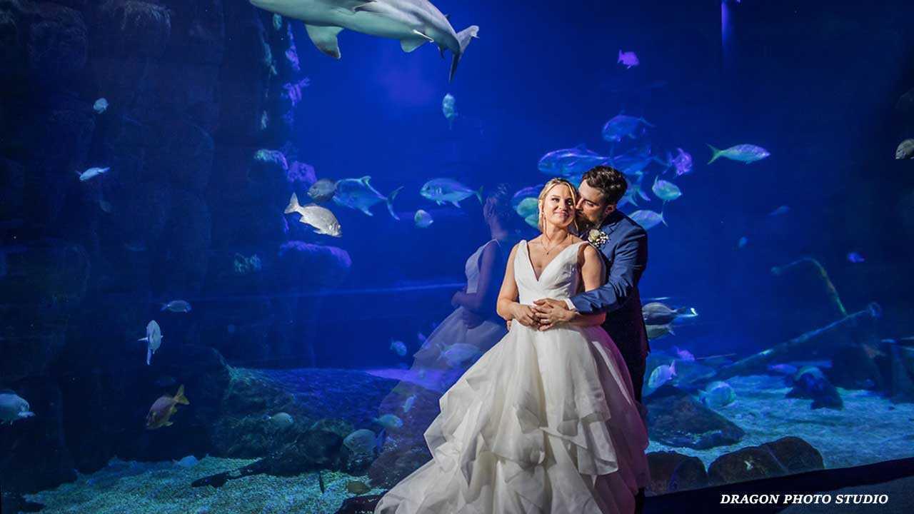 https://www.virginiaaquarium.com/assets/Images/PlanVisit/Plan-an-Event/Sharks-and-Turtles-Wedding.jpg